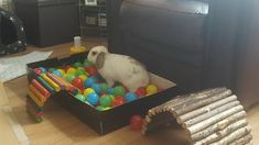 ball pit for digging enrichment. sprinkle a few treats in and watch bunny play - - #Ball #Bunny #digging #enrichment #pit #play #sprinkle #Treats #watch