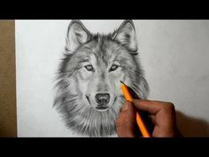 How to Draw a Wolf - YouTube
