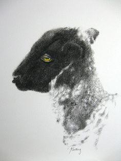 """""""Lamb""""  charcoal pencil, colored pencil"""