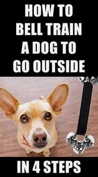 Dog Training Basics Dog Training With Electronic Collars Dog