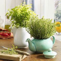 Kräuterdeko mit würzigem Grün  Cute container ideas for herbs
