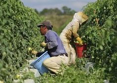 Why Are People Dying to Bring You Dinner? The Shocking Facts About Our Food System.  We hear of the sweatshops behind our computers, sneakers and other attire--yet the exploitation of farmworkers has become normalized. (I was a CHILD farmworker.)