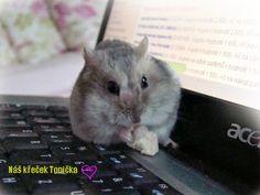 Naše malé i velké poklady: Domácí zvířátka - naši křečci Our loved hamster :-)