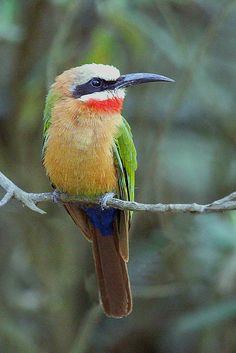 Bee Eater, Hell's Gate National Park, Kenya | Flickr - Photo Sharing!