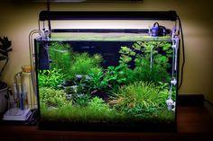 Planted Tank Submerged jungle by Fekete Tamas - Aquascape Awards