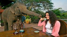 হতর মল তর সবচয় দম কফ  Most Expensive Coffee Comes From Elephant's Black Ivory Coffee https://youtu.be/_MfN-gXUbac