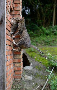 . climbing the walls?