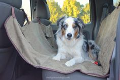 Goose enjoying the Solvit Deluxe Hammock Seat Cover in the hammock set up.