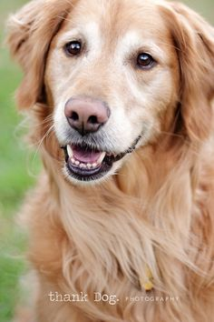 I love Golden Retrievers! Reminds me of Max.