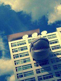HE'S COMING FOR YOU. #SharkWeek