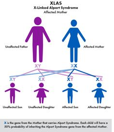 Alport Syndrome Genetics - There are 3 types of Alport Syndrome, each with slightly different symptoms.