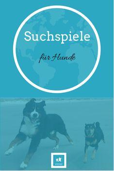 Hundezeitung | Suchspiele für Hunde | https://hundezeitung.info