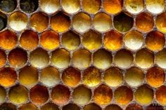 The various colors of pollen in a honey bee nest indicate different source plant species - Honey Bees & Beekeeping - Alex Wild Photography I Love Bees, Birds And The Bees, Honey Bee Hives, Honey Bees, Wild Photography, Insect Photography, Colour Photography, Bees And Wasps, Bee Art