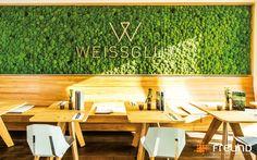 Mur végétal d'intérieur / en végétaux stabilisés / en panneau modulaire GREENHILL - POLSTER MOOS / CUSHION MOSS / MOUSSE BOULE Freund GmbH