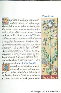 Book of Hours, MS M.732 fol. 8r - Images from Medieval and Renaissance Manuscripts - The Morgan Library & Museum