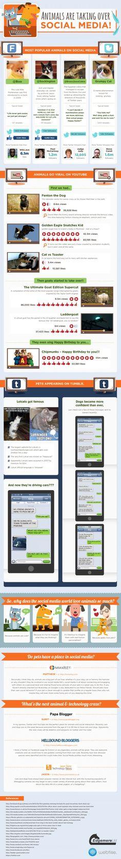 The Most Popular Animals on Social Media via Social Times