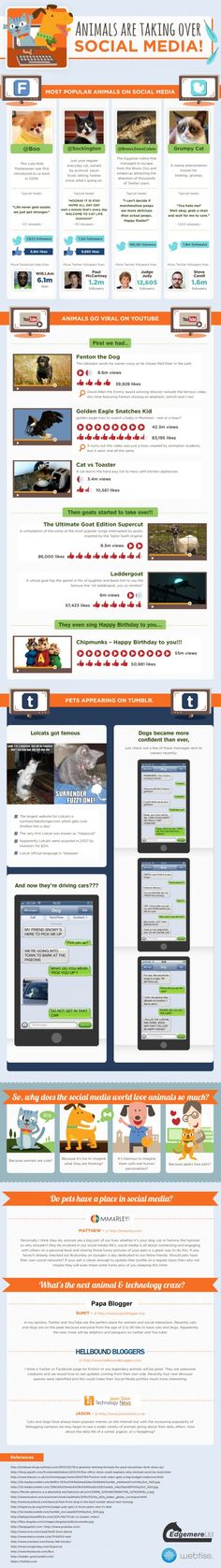 Animals Have Taken Over Social Media [#INFOGRAPHIC]