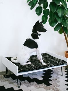 DIY Mid Century dog bed