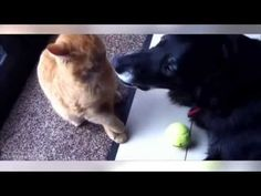 TOP Funny Cats Compilation 2015 Cat Fails Best Cats Video Funniest Cats Humour Cats - http://positivelifemagazine.com/top-funny-cats-compilation-2015-cat-fails-best-cats-video-funniest-cats-humour-cats/