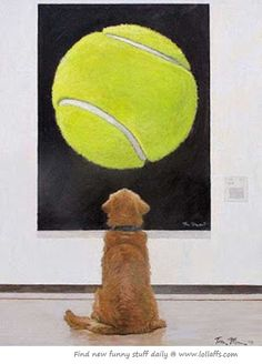 Love at first sight...this would so be my dog!!