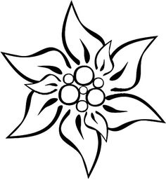 edelweiss flower coloring page - Google Search