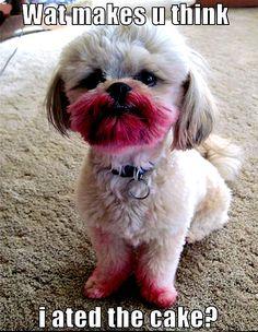 funny animals | dog funny - Animal Humor Photo (20158122) - Fanpop fanclubs