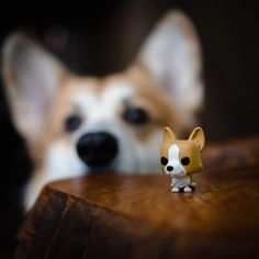 Love Your Pet Day, Cute Kawaii Animals, Funko Pop Figures, Animal Shelter, Small Gifts, Corgi, Creatures, Pets, Illustration