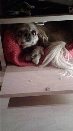 Hunde Foto: Katharina und Luna - Mein Liebling.jpeg Hier Dein Bild hochladen: http://ichliebehunde.com/hund-des-tages  #hund #hunde #hundebild #hundebilder #dog #dogs #dogfun  #dogpic #dogpictures