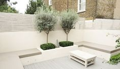 box hedges around the base of the olive tree | Bramerton street ...