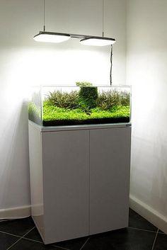 Aquarium Cabinet, Aquarium Stand, Diy Aquarium, Nature Aquarium, Aquarium Fish Tank, Planted Aquarium, Tropical Freshwater Fish, Freshwater Aquarium Fish, Tropical Fish