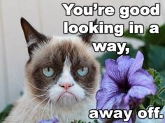 Grumpy Cat: You're good looking in a way . Grumpy Cat Quotes, Grumpy Cat Humor, Funny Animal Memes, Funny Cats, Funny Animals, Grumpy Kitty, Cats Humor, Hate Cats, Cute Cats And Kittens