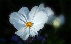 Blume - Jahreszeiten - Galerie - Community