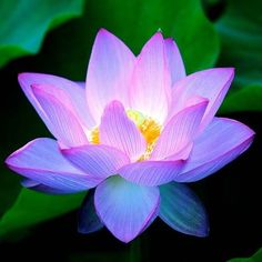 Lotus flower has something hidden and glowing in the center.