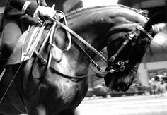 """Rendez-vous"" #chevaldeprestige - Jument en tête de piste #cadrenoir #gala"