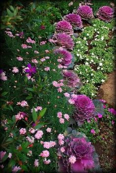 - With the arrival of rains and falling temperatures autumn is a perfect opportunity to make new plantations Beautiful Gardens, Beautiful Flowers, Cottage Garden Borders, Cottage Gardens, Backyard Cottage, Landscape Design, Garden Design, Ornamental Kale, Fall Containers