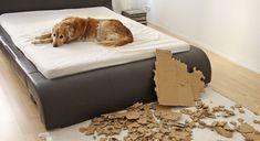 Bild 1 zum Thema Hundespiel im Haustier Ratgeber
