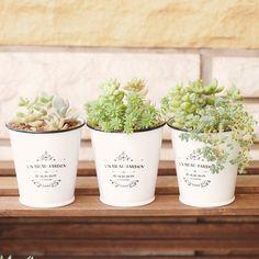 セリアの植木鉢がかわいくて人気。おすすめ商品や使用例などを紹介 | iemo[イエモ]