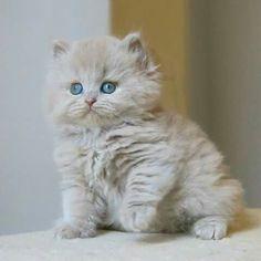 Cute pats. Cats