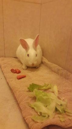 This beautiful female rabbit is the survivor of a pair of rabbits that was thrown on  a garbage dump. Ruchi managed to rescue this female whom she is now fostering. It seems her previous owners did not look after their pets well. She's eating well now and is no longer terrified like she was yesterday. She needs a forever home with a rabbit friendly family. To adopt her, please  email guptaruchi21@gmail.com #Delhi