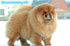 Top 10 Dangerous Dog Breeds Most Likely to Turn on Their Owners - Top 10 of Anything And Everythings