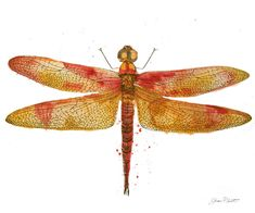 Dragonfly Bliss-jp3442 Painting by Jean Plout