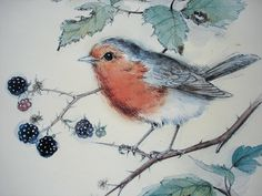 Vintage Bird Print - Robin Redbreast Print - Watercolour and Pencil Sketch