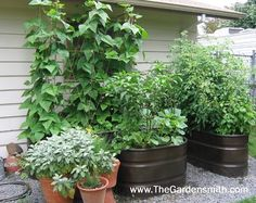 Galvanized, Corrugated Metal Troughs for Planters  (Vegetable Garden in Containers - eclectic - landscape - portland - The Gardensmith)