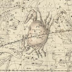 This depiction of the constellation Cancer (the Crab) is taken from the Celestial Atlas by Alexander Jamieson - 1822.  The identification of Cancer as a crab is rooted in the Twelve Labors of Hercules tale. Hercules battled the multi-headed Lernaean Hydra and Hera had sent a large crab to distract Hercules and put him at a disadvantage during the battle. But Hercules quickly dispatched the creature by kicking it with such force that it was propelled into the sky.