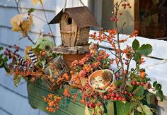 Fall window boxes!  Love them!