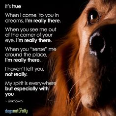 Missing your furry friend today? Don't worry; they are always with you.