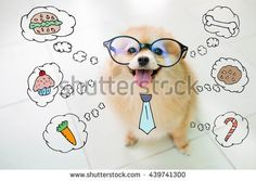 Pomeranian Spitz dog smiles thinking about feeding the hungry. Pomeranian Spitz, Spitz Dogs, Smiling Dogs, Royalty Free Images, Snoopy, Teddy Bear, Stock Photos, Animals, Fictional Characters