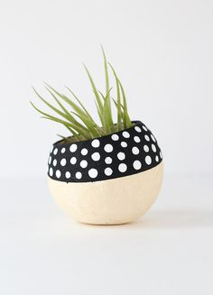Black and White Polka Dot Air Plant Holder