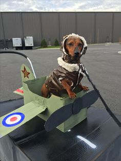 Aviator dog costume with airplane made out of cardboard box. Weiner dog! Halloween dog costume winner! & Aviator dog costume with airplane made out of cardboard box. Weiner ...