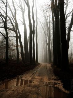 Dark Forest, The Netherlands photo via km